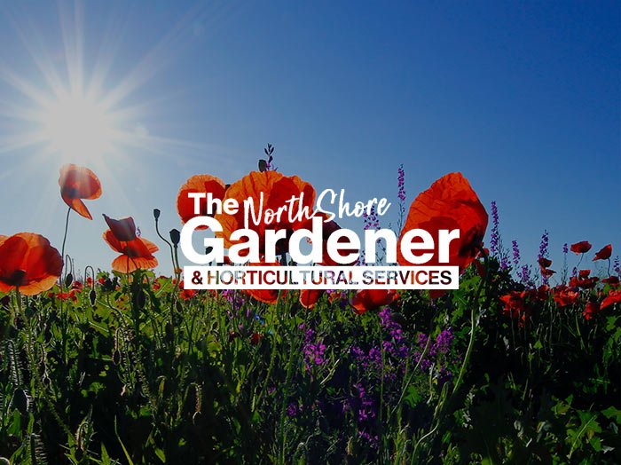 The-north-shore-gardener
